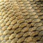 Cuál es la función de las escamas de un pez