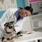 Positive & Negative Features of Being a Veterinarian