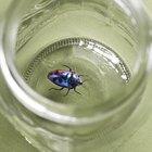 Como matar os insetos aquáticos em uma piscina