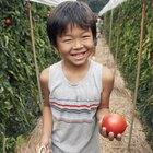 Curas para la pudrición apical del tomate
