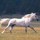 Como tratar articulações inchadas de cavalos