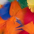 How to dye feathers
