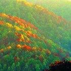 Campamento primitivo en las montañas de Wilderness Georgia