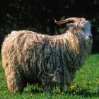How to clean mohair