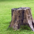 How to make a tree stump bird bath