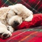 Cães: sintomas das crises de vesícula