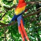 Por que papagaios morrem de repente?