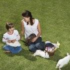¿Cómo alimentar a un bebé de conejo salvaje?