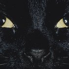 Why Black Cats Sometimes Get a Bad Rap