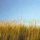 Cortadoras de hierba alta, malezas y broza