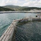 Vantagens e desvantagens da piscicultura