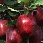 ¿Cuáles son los peligros de usar espray de sulfato de cobre en árboles frutales?