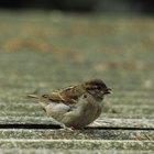 Cómo calmar a un pájaro con un ala rota