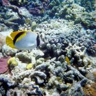 Advantages and disadvantages of offshore reefs