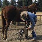 Carreras que involucran tratar con caballos