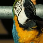 How to Stop a Parrot From Chewing His Feathers