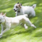 Socialization Ideas for an Adolescent Dog