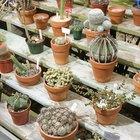 La vida de un cactus