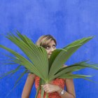How to plant a palm cutting