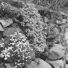 Ideias de jardinagem em barrancos