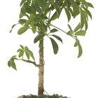 Plantas que viven en suelos ácidos