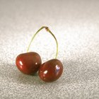 How to grow cherry trees from pits