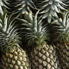 What is the Life Span of Bromeliads?