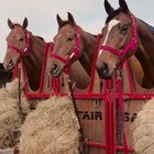 Ideas para hacer comederos de lenta liberación de heno para caballos
