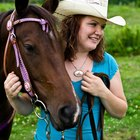 Persuasive speech topics for the horse lover