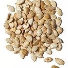 Usando sementes de abóbora como vermífugo