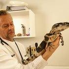 ¿Qué tipos específicos de veterinarios existen?