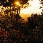 Quais adaptações as plantas sofreram para sobreviver na floresta tropical?