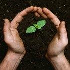 Cómo plantar un árbol en memoria de alguien que ha fallecido
