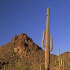 Los mejores lugares para acampar y pescar cerca de Tucson