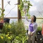 Cuáles son ejemplos de plantas perennes