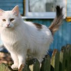 Preventative Treatment for Ticks & Worms in Cats