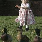Cómo hacer un estanque para patos