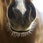 Espuma en la boca de los caballos