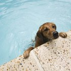 Should Your Dog Swim in an Inground Pool?
