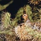 Hábitos de anidación de las palomas