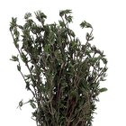 How to plant a rosemary hedge
