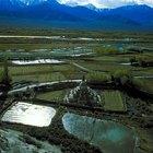 La importancia de los biofertilizantes en la producción de cultivos