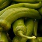 Como cultivar e amadurecer pimentas rapidamente