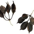 5 características comuns em todas as plantas com sementes