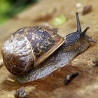 How To Tell If a Land Snail Is Dead