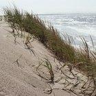 Plantas de la costa del océano
