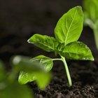 ¿Cuál es la materia orgánica en las plantas?