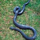 Cómo alejar a las serpientes del jardín