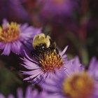 ¿Porqué son importantes las abejas para la supervivencia del hombre?
