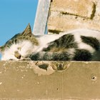 Severe Sleepiness in Cats